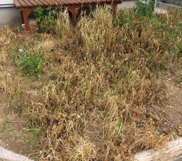 除草剤 お庭